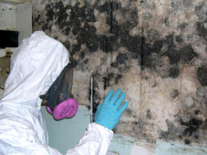 Best Mold Remediation Grantville GA-(470) 205-4188